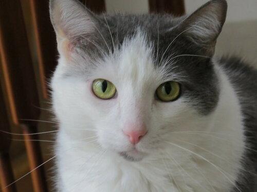 Кот прогулялся по столу ведущего в эфире турецкого телеканала