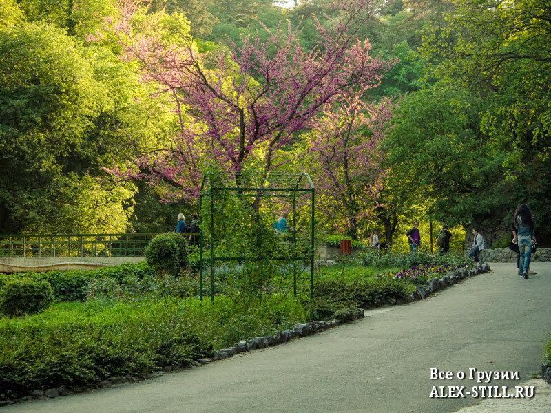 Обычно в ботаническому саду Тбилиси немного народу