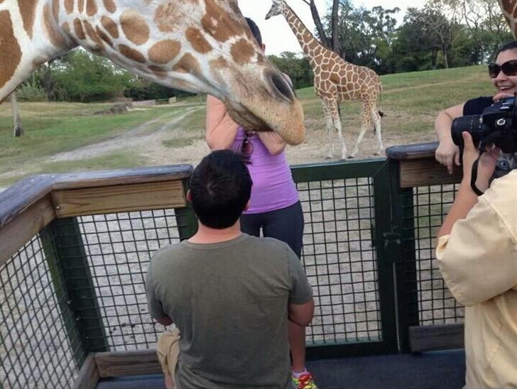5. Когда рядом жирафы.