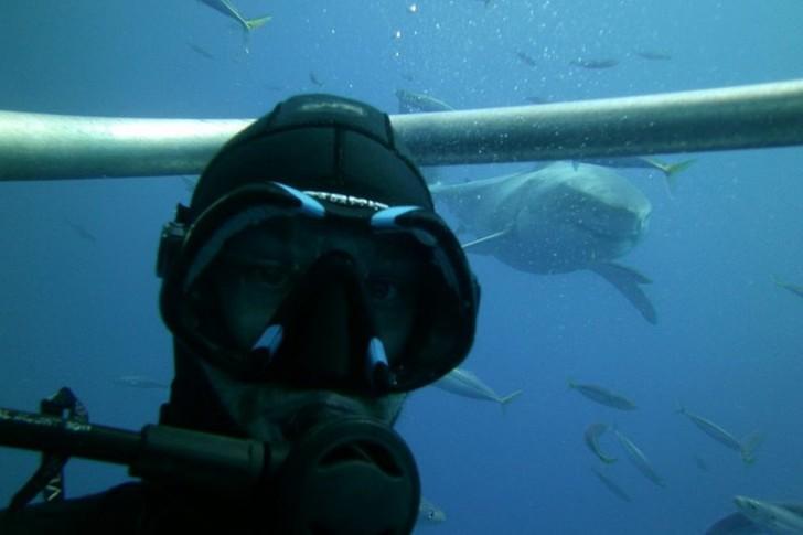 25. Где бы то ни было, когда рядом акула.