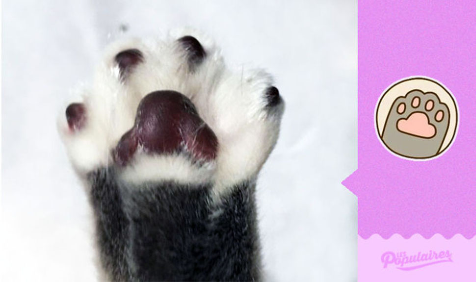 «Дай пять!»
