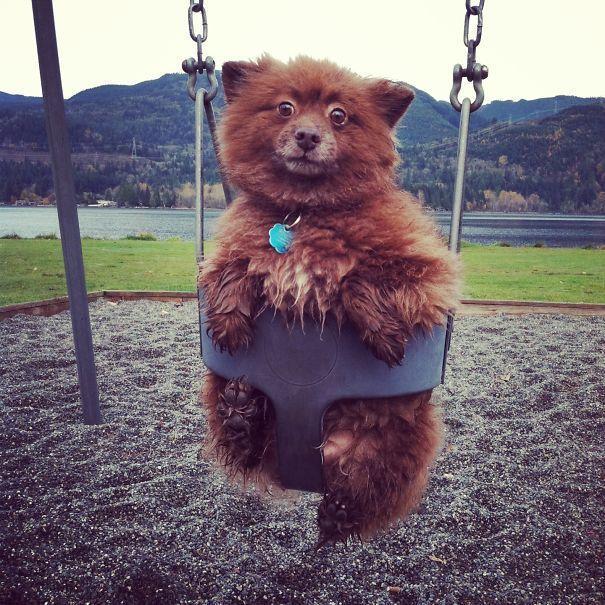 9.Просто медвежонок решил покачаться на качелях