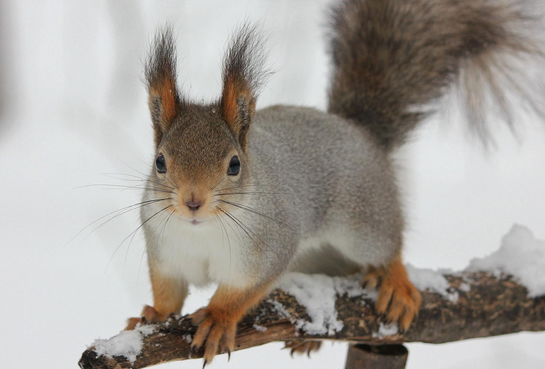 У вас орешки ?
