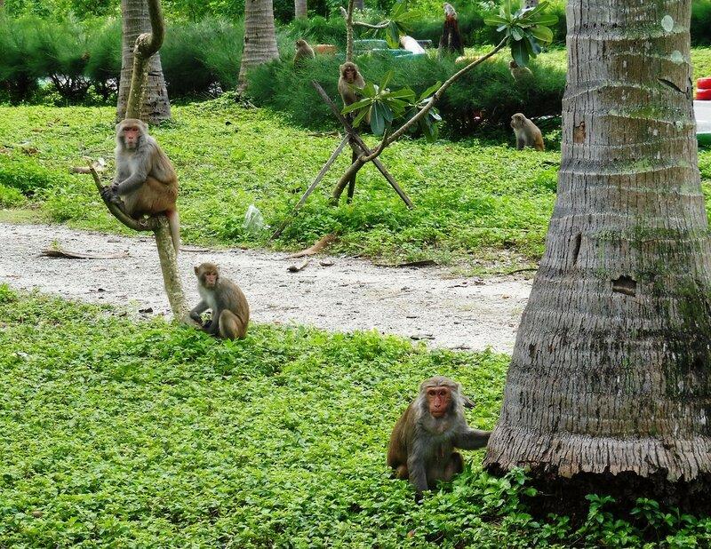 В гостях у обезьян