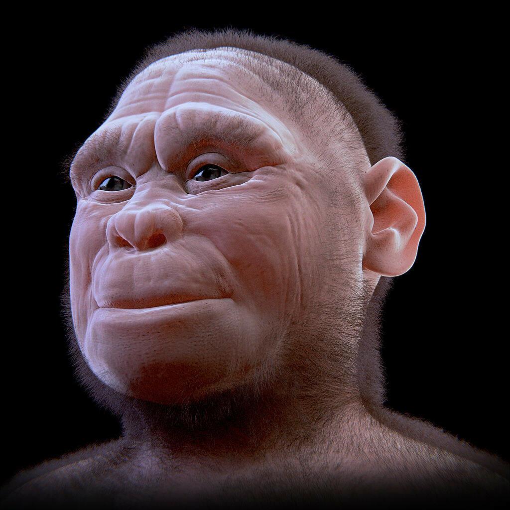 1024px-Homo_floresiensis_v_2-0.jpg