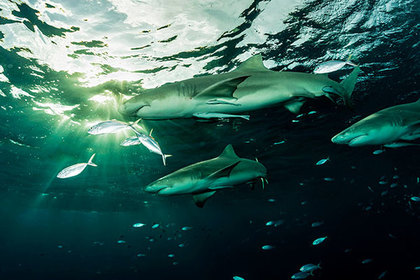 На отдыхающих во Флориде напали акулы