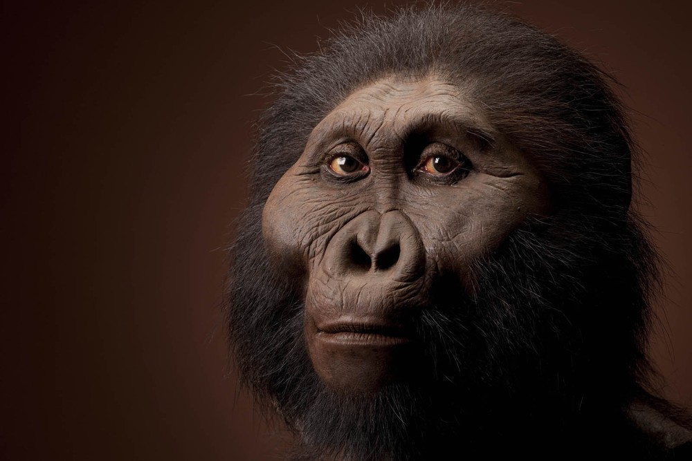 Paranthropus boisei male.  Reconstruction based on OH 5 and KNM-ER 406 by John Gurche for the Human Origins Program, NMNH.  Date:  2.3 to 1.2 million years.