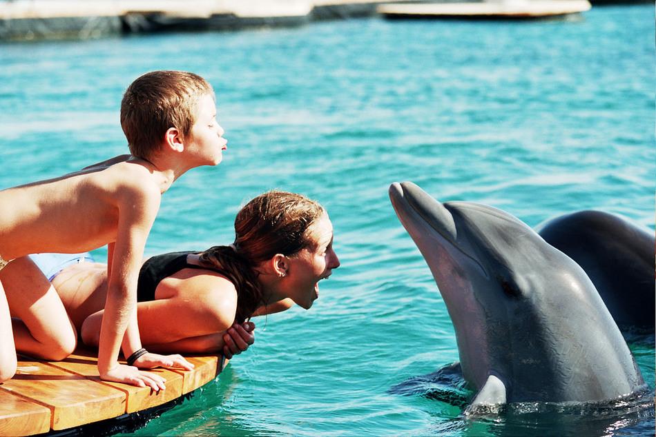 Дельфины-афалины и их малыши, рожденные прямо здесь в заповеднике, живут своей обычной жизнью: играю