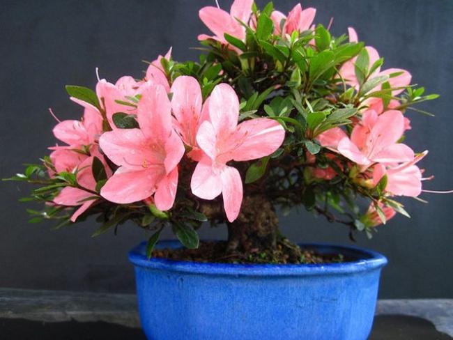 10комнатных растений, скоторыми дышится легче (10 фото)