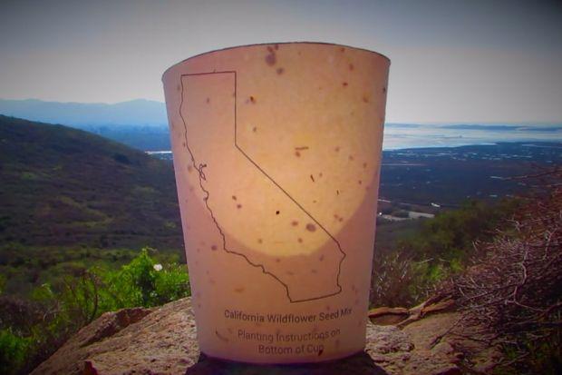 Кофейный стакан — растение В одних только США ежегодно используется более 140 млрд одноразовых стака