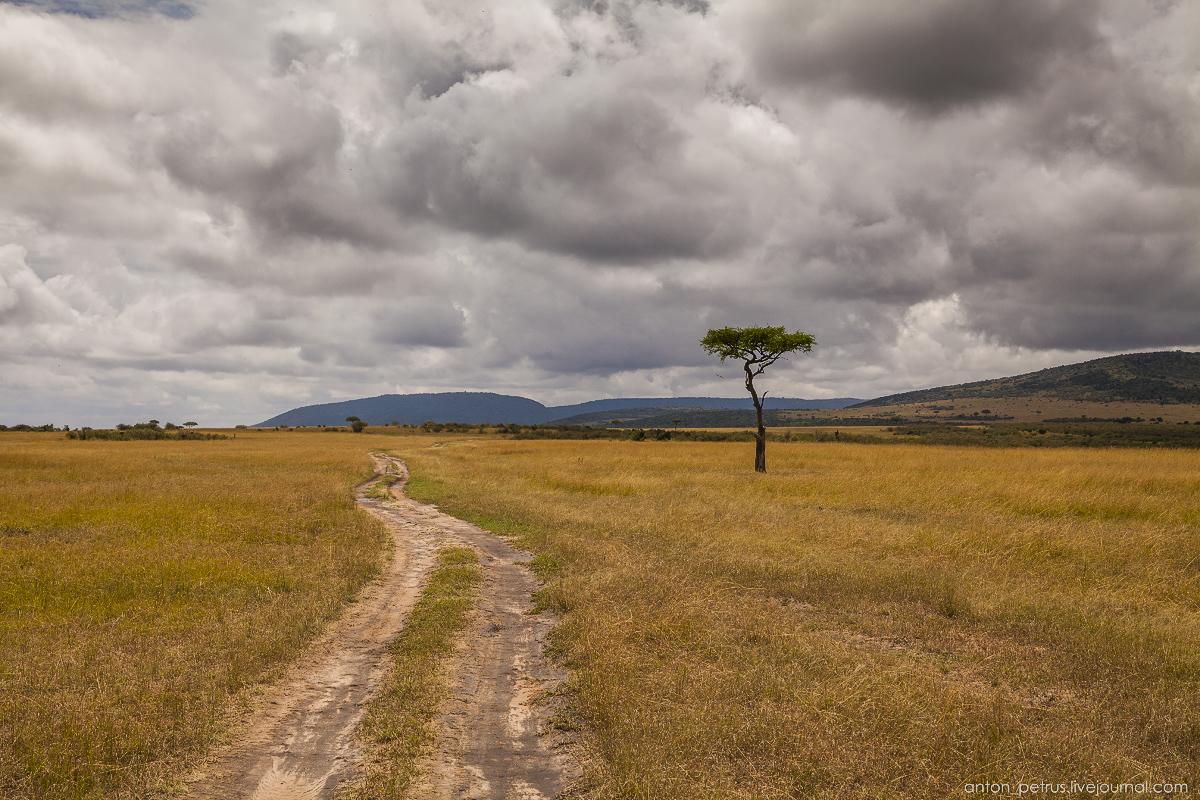 Не хватает слона или жирафа у дерева.