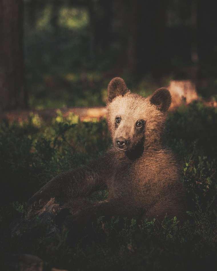Animal Poetry - The captivating photographs of Konsta Punkka