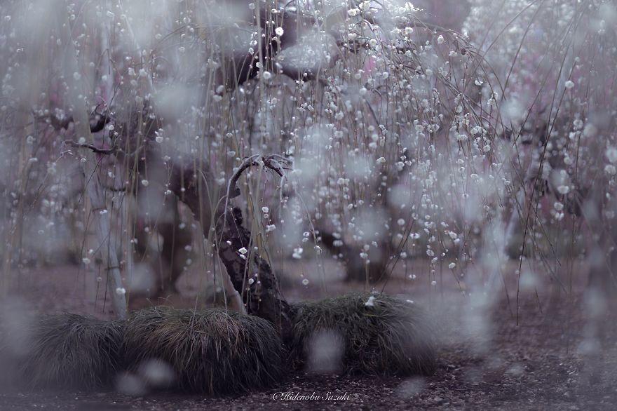 Poetic Spring Scenes in Japan by Hidenobu Suzuki