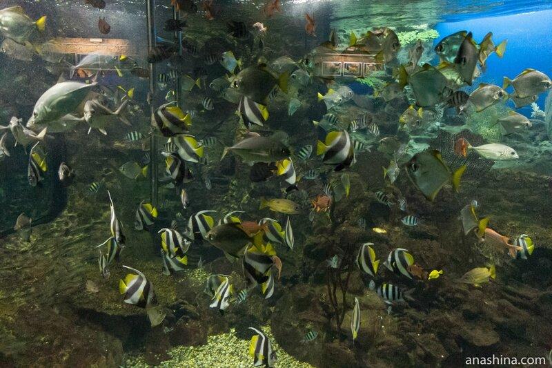Многообразие рыб, Океанариум в парке Ривьера, Сочи
