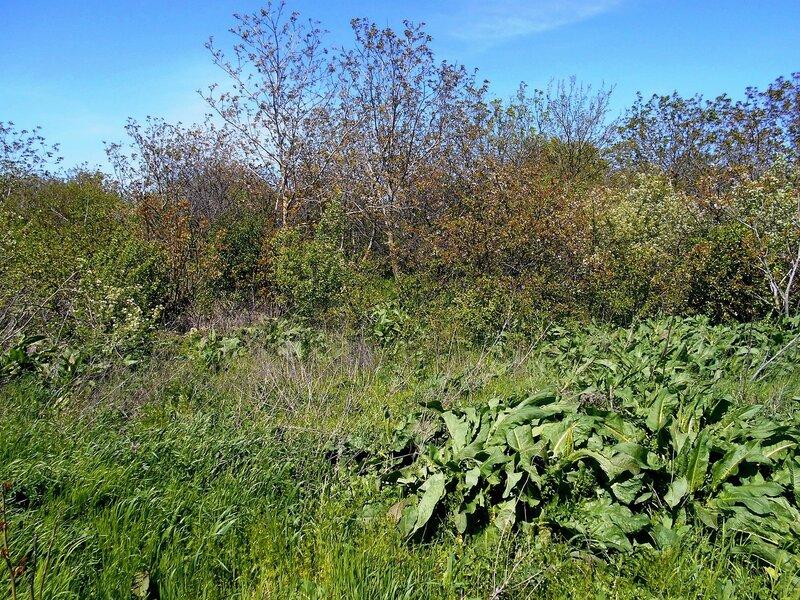 В мире растительном, день апрельский ... DSCN5303.JPG
