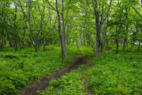 Тропу через лес отлично заметно