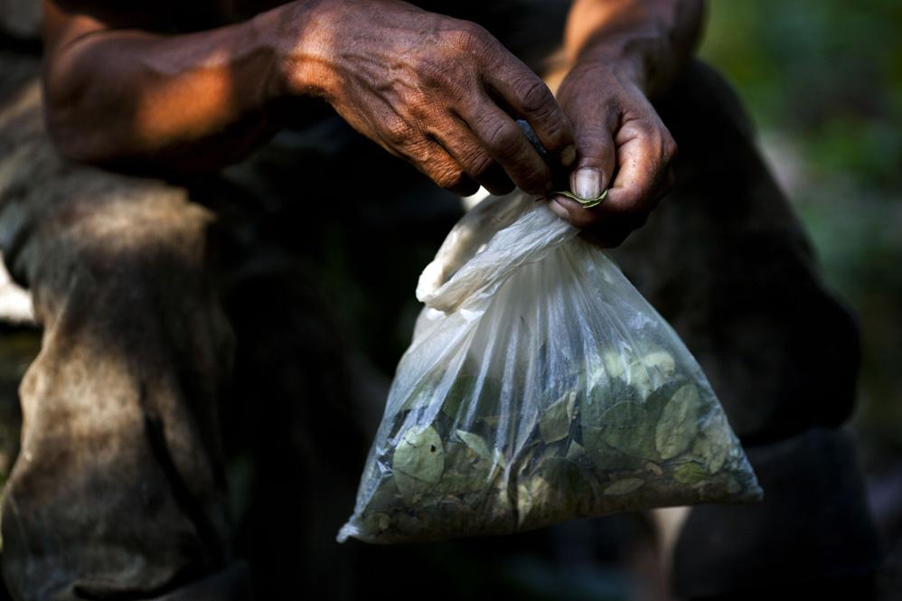 Традиция выращивания листьев кoки в Перу