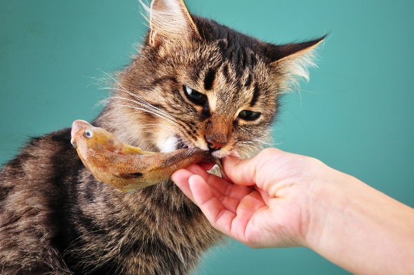 подкармливайте кошку