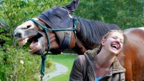 Мысли умной лошади из проката.