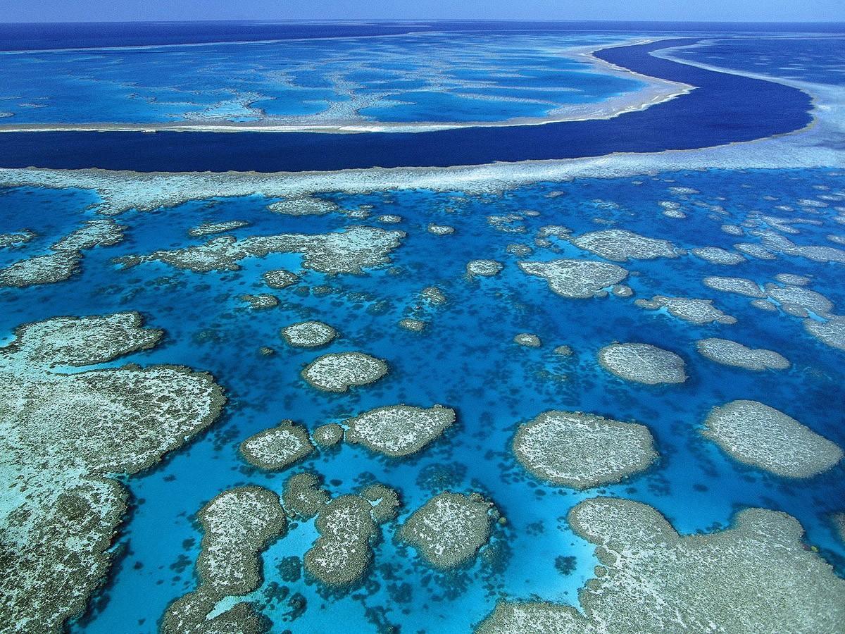 63. Займитесь дайвингом у Большого Барьерного рифа, Австралия.