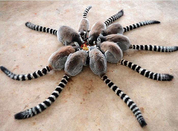 7. Лемуры во время обеда складывают из хвостов фигуру, отпугивающую злых духов.
