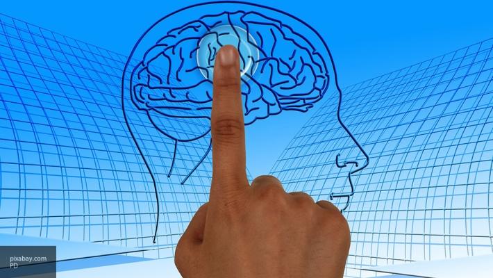 Учёные обнаружили вещество, замедляющее старение мозговых клеток