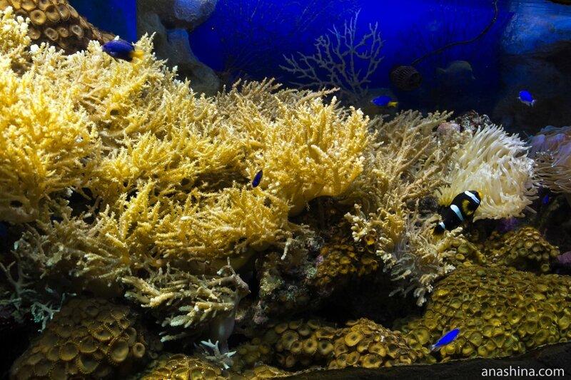 Кораллы, Океанариум в парке Ривьера, Сочи