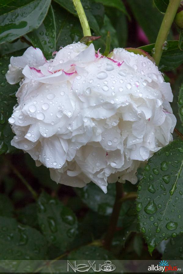 У природы нет плохой погоды, выпуск # 20 | Очарование упавших капель.