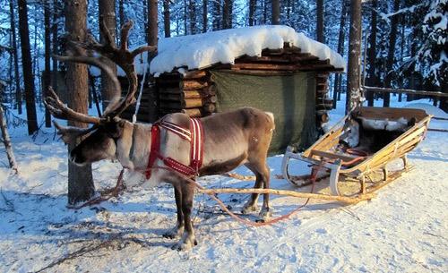 Устройте зимнюю сказку в Финляндии