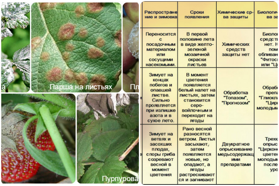 Калина уход и выращивание защита от вредителей 28