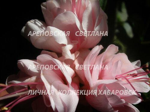 НОВИНКИ ФУКСИЙ. - Страница 5 0_1514d9_12e7710d_L