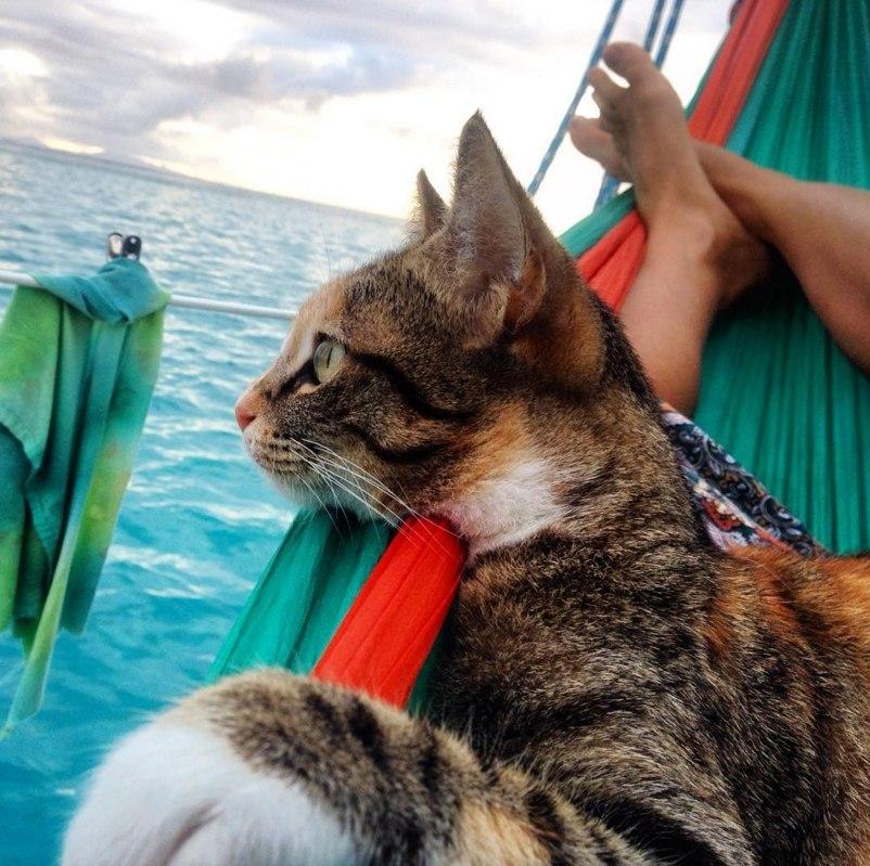 Девушка путешествует по свету в компании подобранной кошки