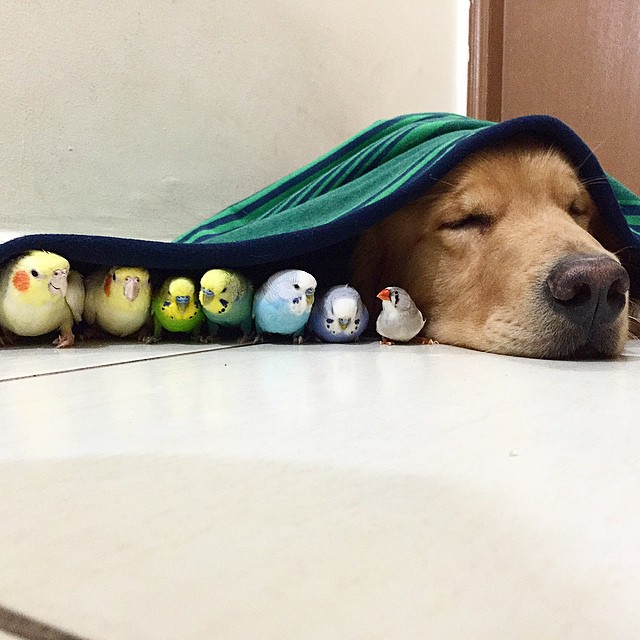 Собака, хомяк и 8 попугайчиков
