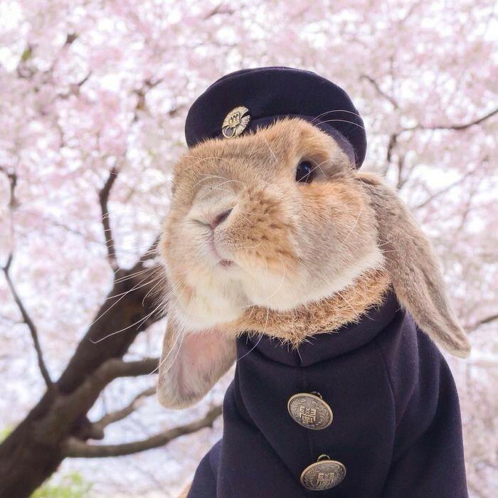 Кролик-модник из Японии