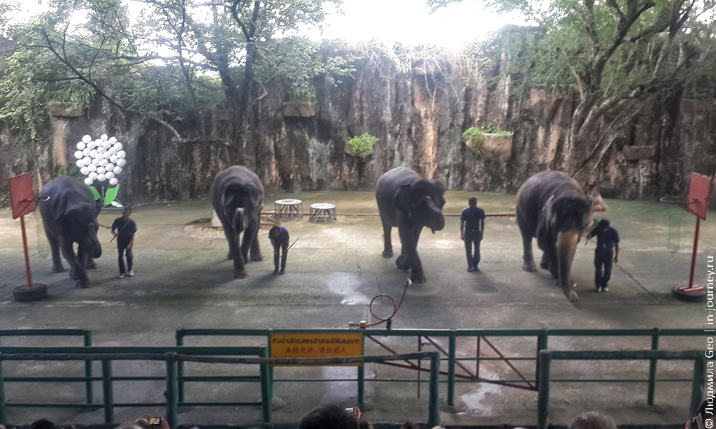 шоу слонов фото и видео