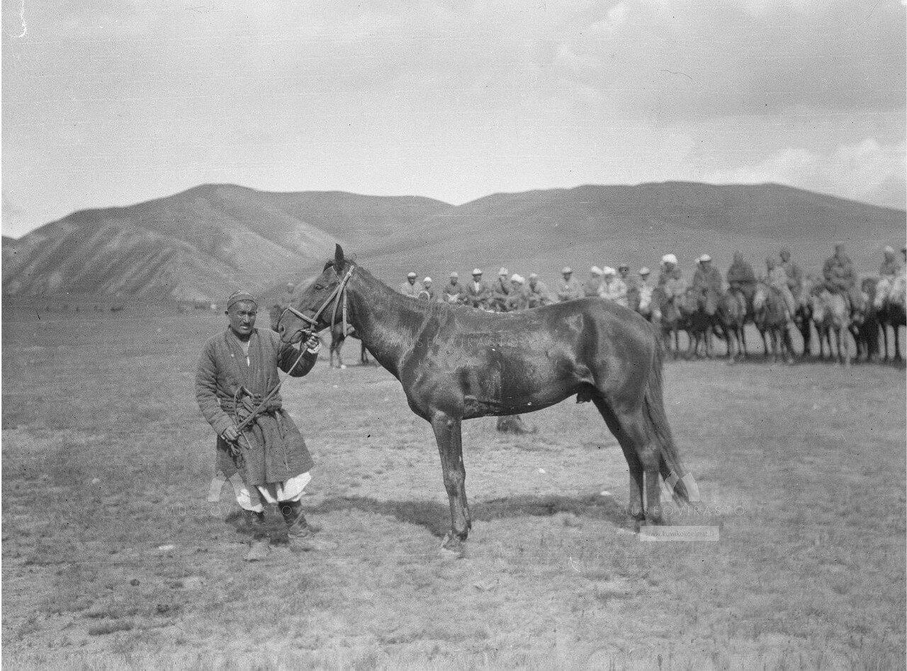 Киргизская лошадь