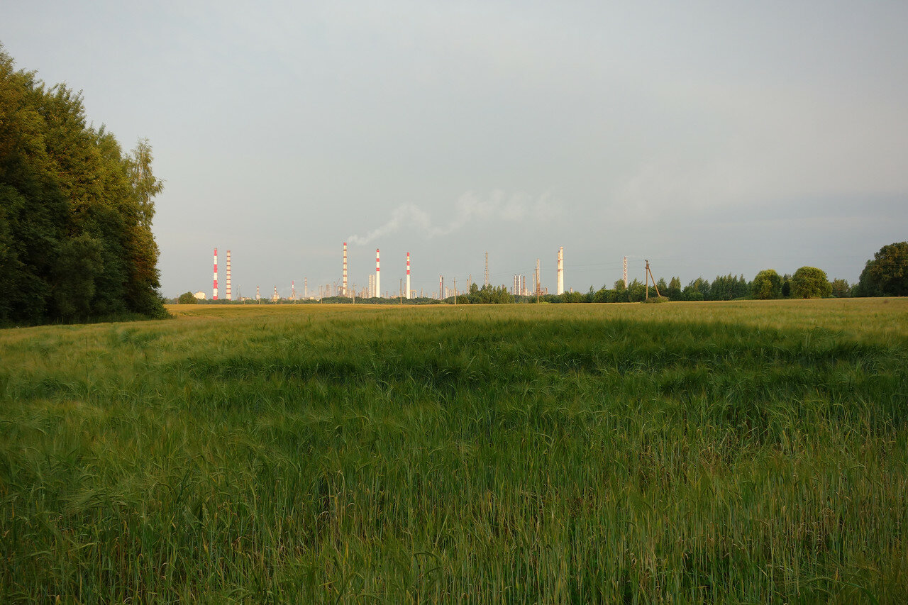 сотни нефти и злаковое поле