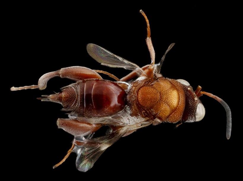 Макрофотографии разноцветных американских пчел 0 13d2aa 4078ffd7 orig