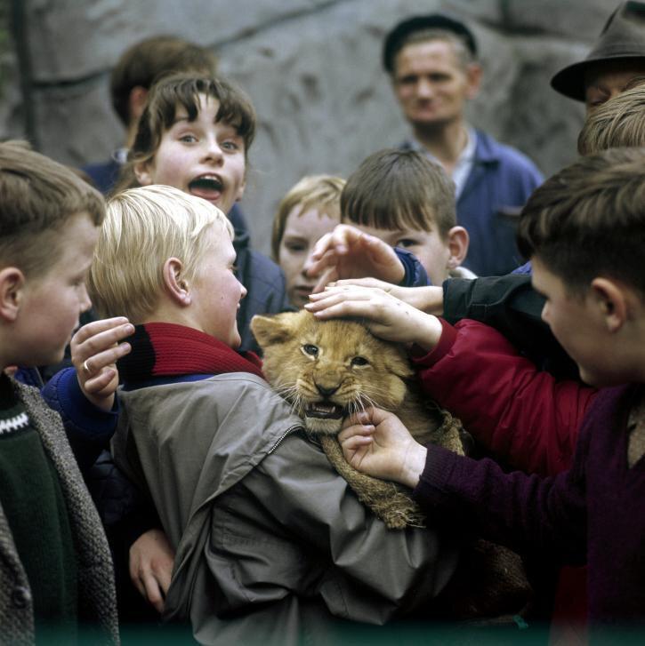 Children holding a whelp in a Dutch zoo