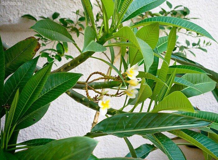 Растительный мир Дахаба