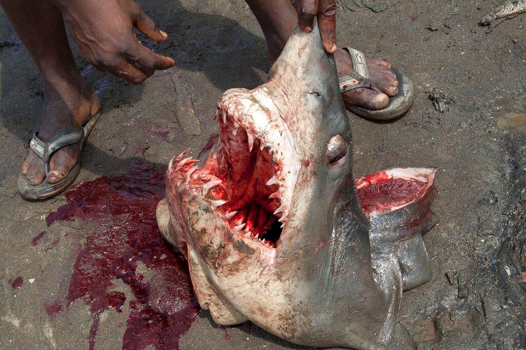скачать игру про акулу - фото 5