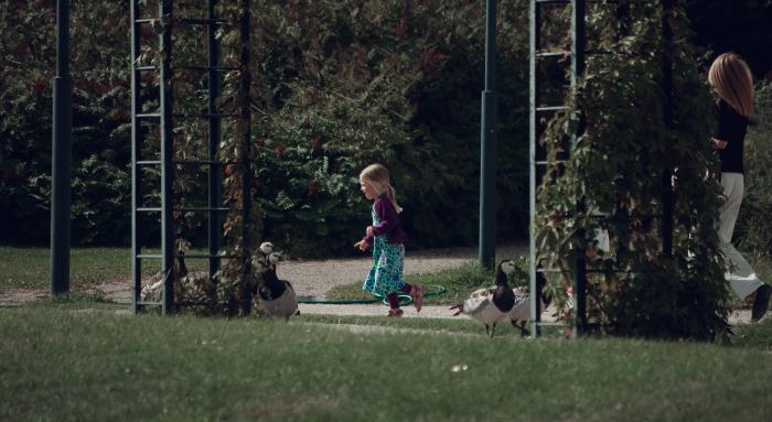 девочка гоняет гусей