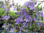 На фазенде рабыни Изауры.  (наши огородно-цветочные хвастики) 0_7ea4b_f737a6f9_S