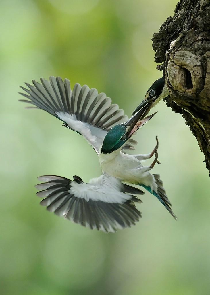 Фотоподборка птиц