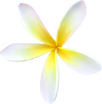 nbeaudreau_ParadiseFound_flower.png