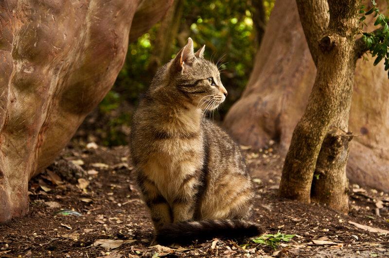 Ялтинский кот