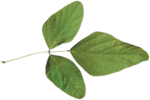 MiMiConcept-Collab Natural Fresh-Elements (21).png