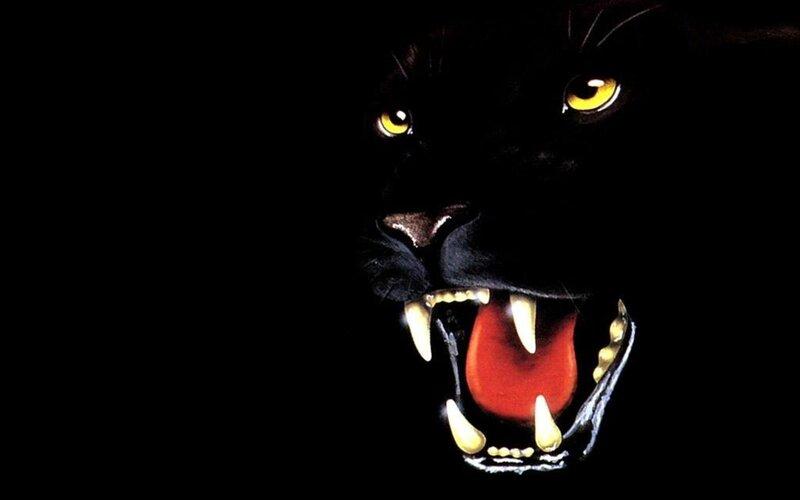 """Схема вышивки  """"Черная пантера """" ."""