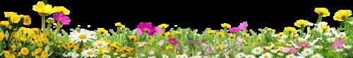 Поляны с цветами