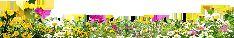 Картинки по запросу цветы на траве на прозрачном фоне
